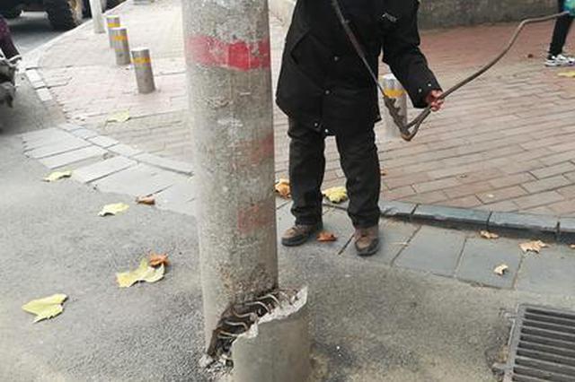 郑州街头两根线杆双双被撞得摇摇欲坠 市民:太吓人!