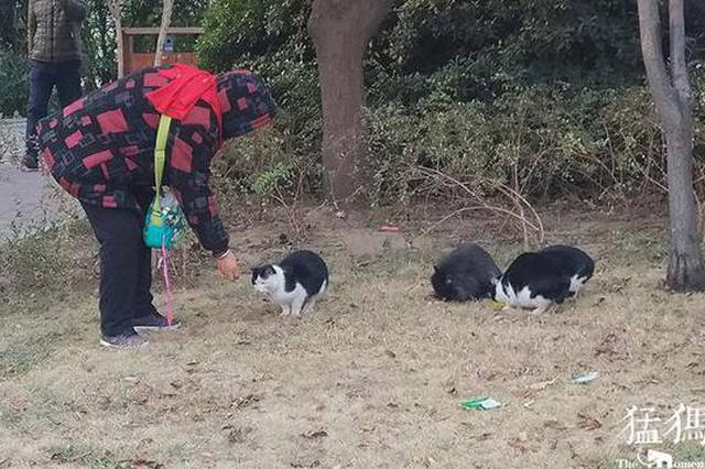 郑州78岁老人六年如一日 坚持照顾近百只流浪猫