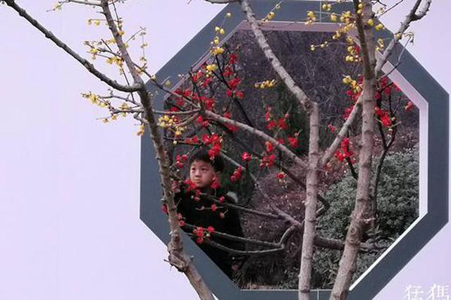 赴新春之约 赏梅香风姿 郑州绿荫公园迎佳节