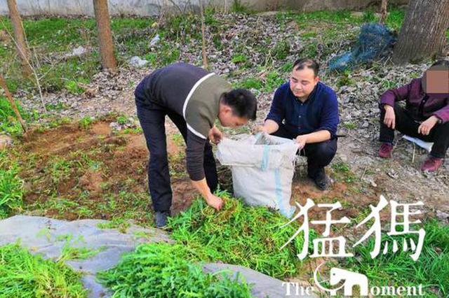 驻马店正阳公安连续破获3起非法种植罂粟案件