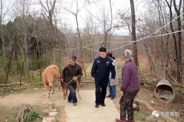 南阳方城贫困群众耕牛被盗 山乡民警百日寻回