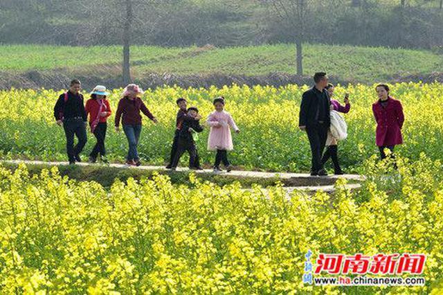 河南罗山县:43万亩油菜花竞相开放(图)