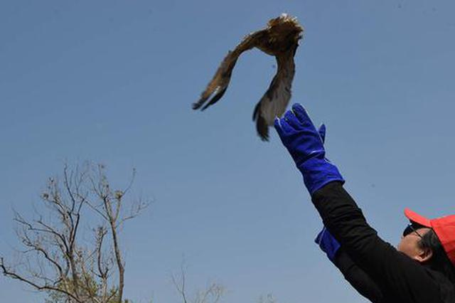 卫星跟踪锁定苍鹰 兰考13只野生鸟类重回大自然