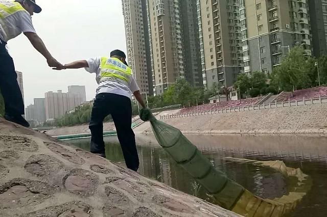 """郑州一生态河道发现""""绝户网"""" 这是要对鱼儿赶尽杀绝"""