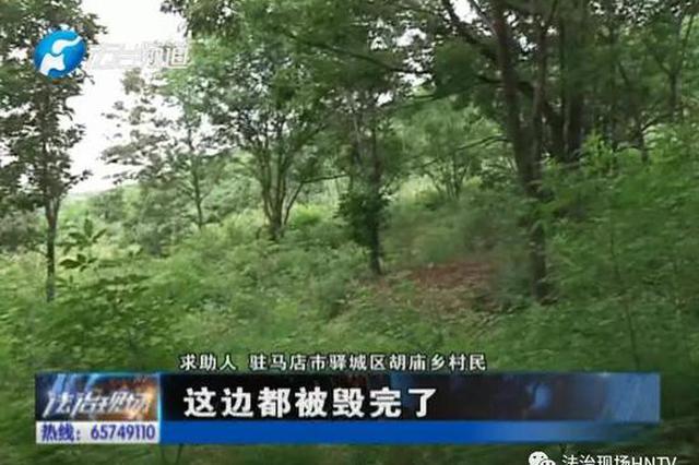 驻马店数十亩树林被毁 砍伐者竟未被追责?