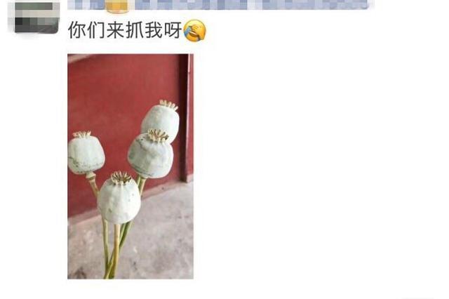 洛阳女子发朋友圈配罂粟照片:来抓我呀 民警:来了