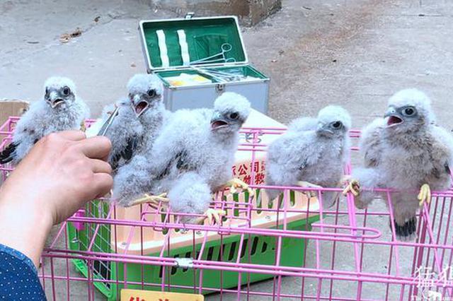 郑州市民发现6只幼鸟 竟是国家二级重点保护动物