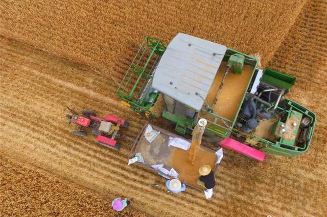 组图:河南麦收进入高潮期 一派丰收景象