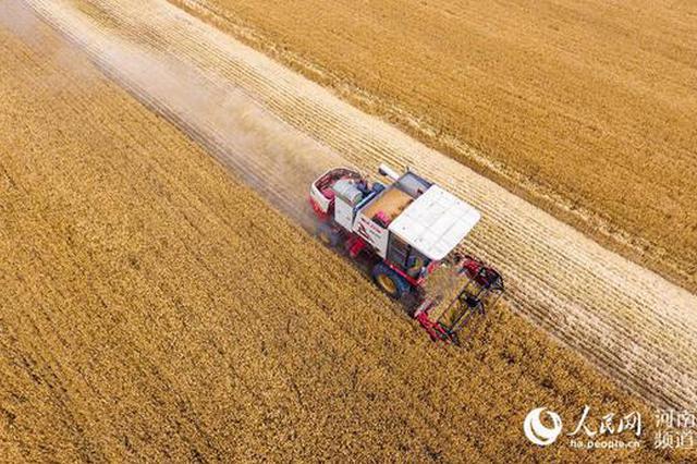 丰收!河南夏粮产量749亿斤 再创新高