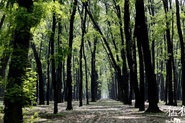 打造大都市生态圈 郑州国家中心城市森林生态系统规划公布