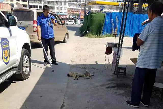 固始疯狗咬人伤者升至15人 已有一条伤人流浪狗被打死