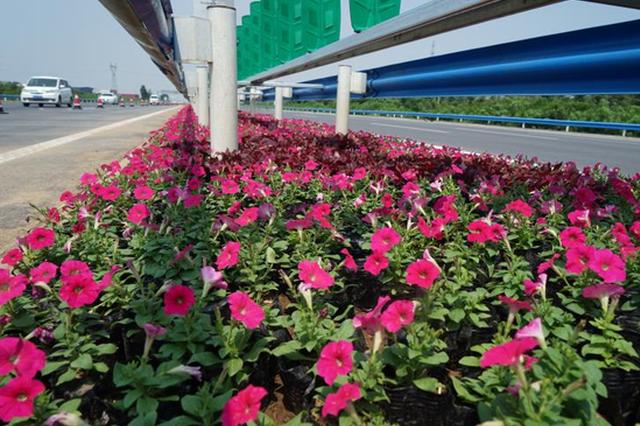 """防眩 保洁 常绿!郑州机场高速公路开启""""美颜""""特效"""