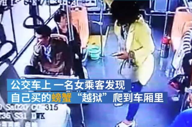"""郑州一女乘客的螃蟹""""越狱"""" 公交司机停车帮抓"""