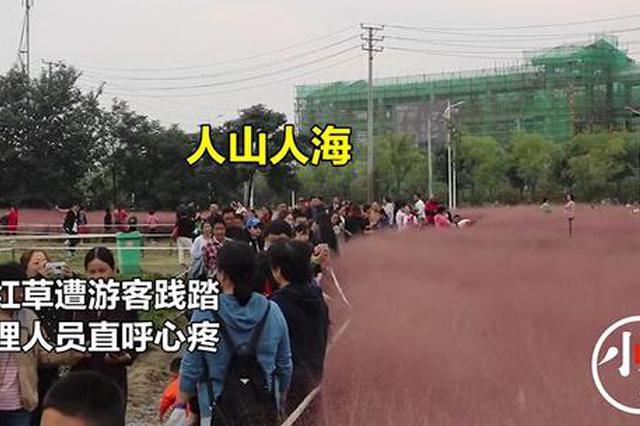 郑州网红草遭践踏管理人员心疼:就像看护孩子一样