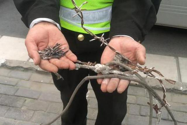 """郑州路边行道树被钉成""""刺猬"""" 半小时拔除30多颗钉子"""