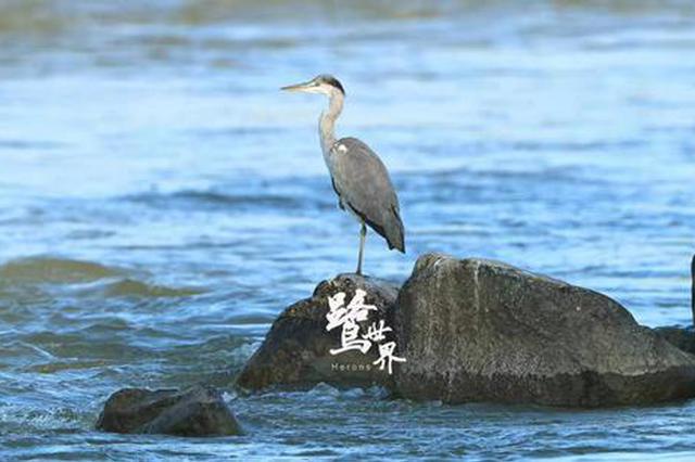 《鹭世界》喜获艾美奖 讲述黄河边的母爱故事