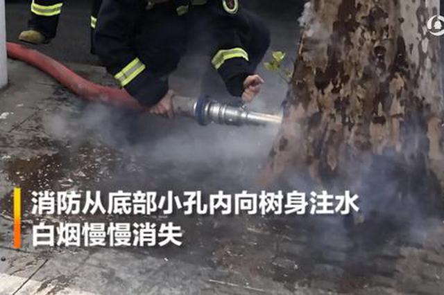 """信阳街头行道树突然冒烟 原来是""""切割""""惹的祸"""