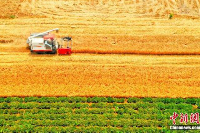 河南今年粮食总产量再创新高 达1339.08亿斤