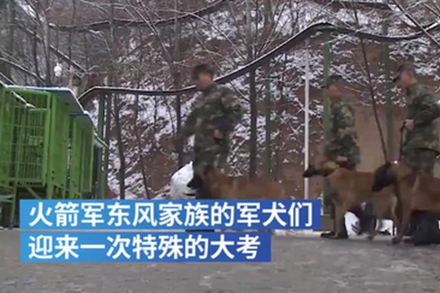 """洛阳:""""军犬战士""""迎考核 叼炸药包爆破排险"""