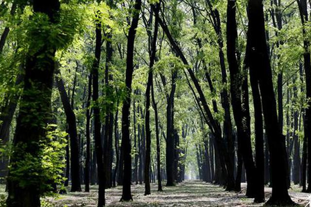 河南强化森林防灭火协同配合 共防共治森林火情