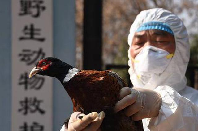 """郑州一宠物店突然跑进野鸡""""讨""""吃喝 被好心店主救下"""