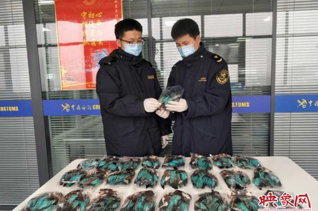 郑州海关邮递渠道查获濒危物种翠鸟皮毛25张