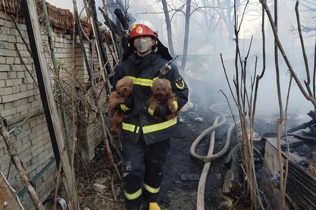 犬舍着火 周口消防员浓烟中救出30多只小泰迪