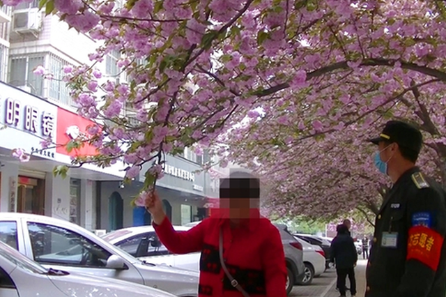 郑州这条街樱花盛开成网红地 但这些行为不可取