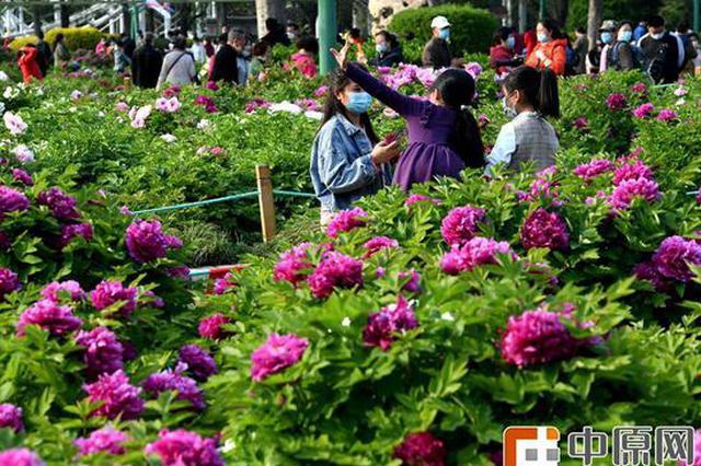 组图:郑州人民公园牡丹花开正艳