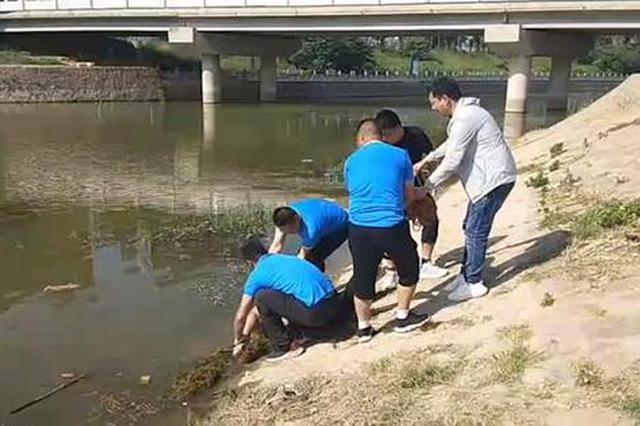 郑州6旬游泳爱好者落水失踪 翌日打捞上岸已溺水身亡