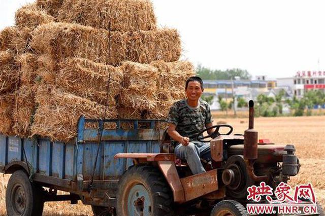 淮滨:麦收35万亩 秸秆成麦田新宠(图)