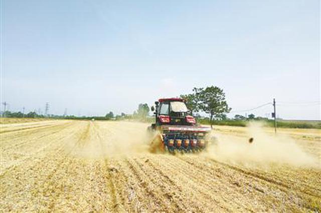 风吹麦浪 郑州小麦收获已过九成
