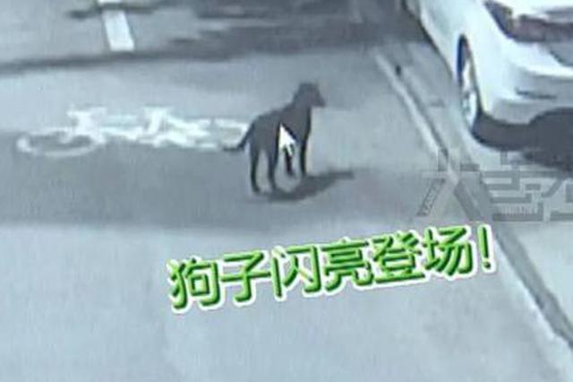 立功啦!新密警方全城寻找要给这只小黑狗买鸡腿