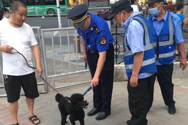 """助力""""静音高考"""" 郑州强力整治不文明养犬行为"""