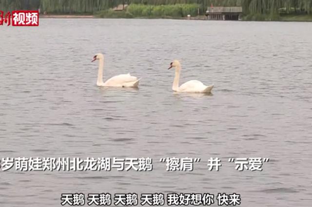 """郑州萌娃向天鹅""""示爱"""":你能听见我吗?我好想你"""