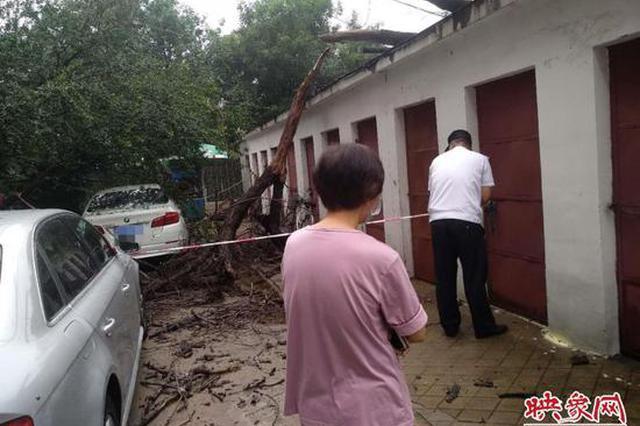 郑州一枯死榆树在雨中倒下 连砸1辆宝马车1辆奥迪车