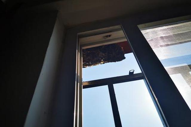 吓人!13个马蜂窝遍布校园 郑州消防员3小时全部摘除