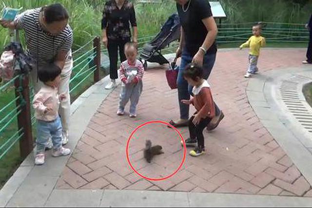 """郑州游园发现""""黏人""""松鼠 追着市民套近乎讨要吃喝"""