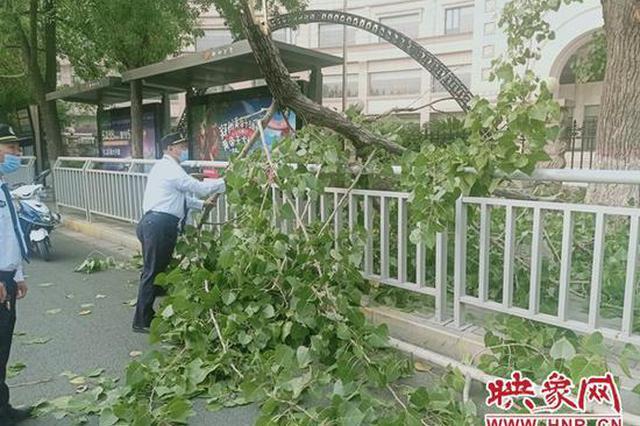 郑州10米高空中粗大树枝垂直砸下 幸未伤到行人