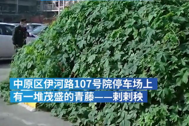 郑州停车场上一堆青藤 扒开一看里面有辆私家车