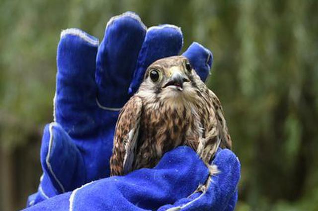 正值候鸟迁徙季 郑州60多只被救护野生鸟儿康复后重回蓝天