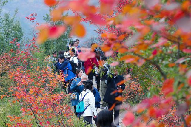 河南洛宁:满山红遍景如画 生态效益惠民生