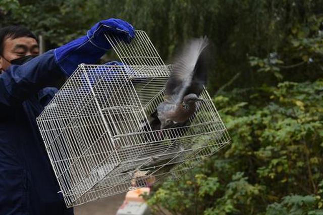 放飞!62只小鸟在郑州重回大自然(图)