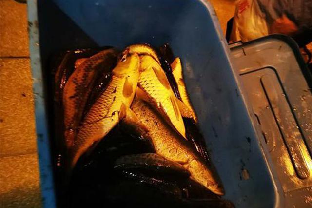 野生鱼有多香?漯河男子半夜带自制工具下河电鱼被抓