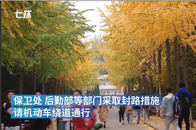 """视频:河南一高校""""封路""""让师生赏银杏美景"""