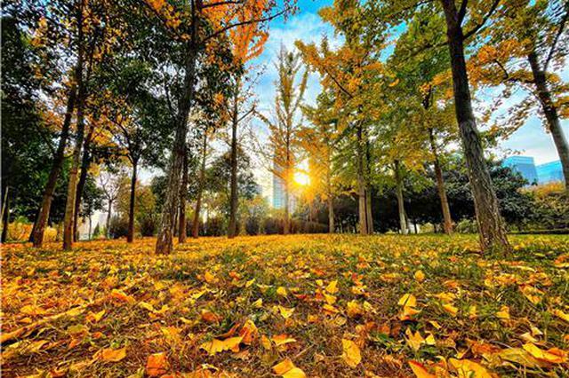 郑州的秋天可以有多少种颜色?(图)