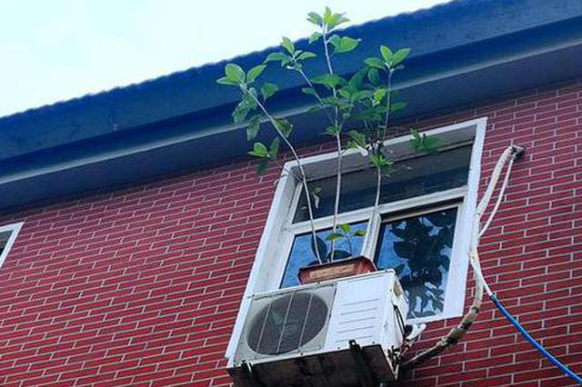 """郑州人行道""""头顶""""养花 市民:就怕风大 管要人命!"""