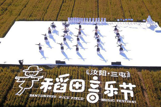洛阳汝阳:稻田里的音乐节(图)