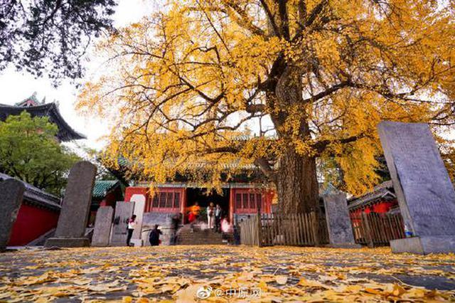 少林寺的秋天 进入最美的时候(图)