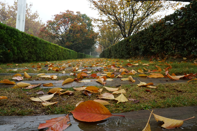 郑州:冷冷的细雨 瑟瑟的初冬(图)